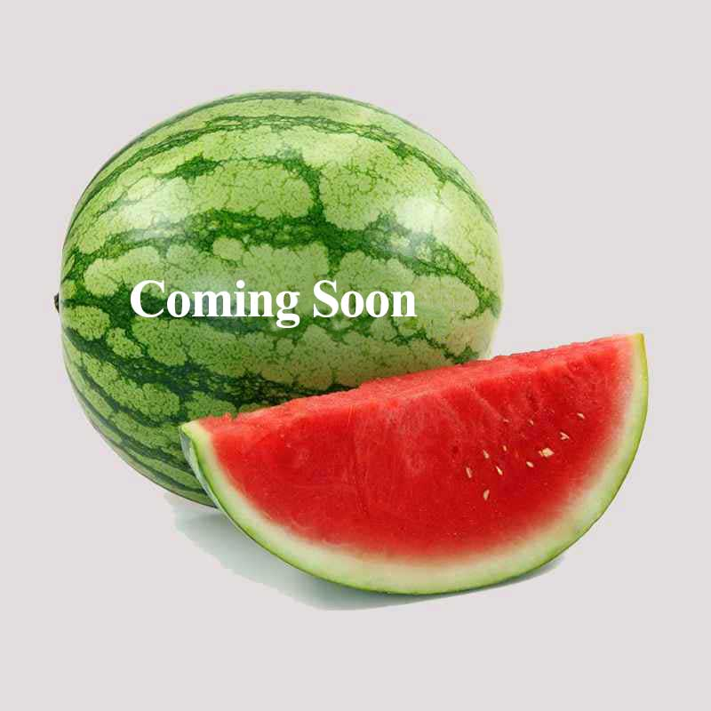 watermelon- Danje- Hamid amir seyedi