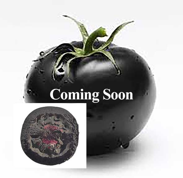 Black Tomato- Danje- Hamid amir seyedi